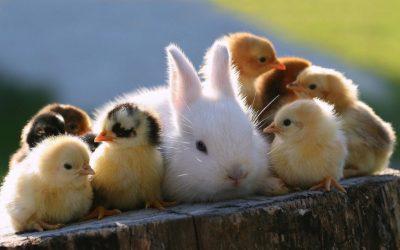Svet-životinja.org
